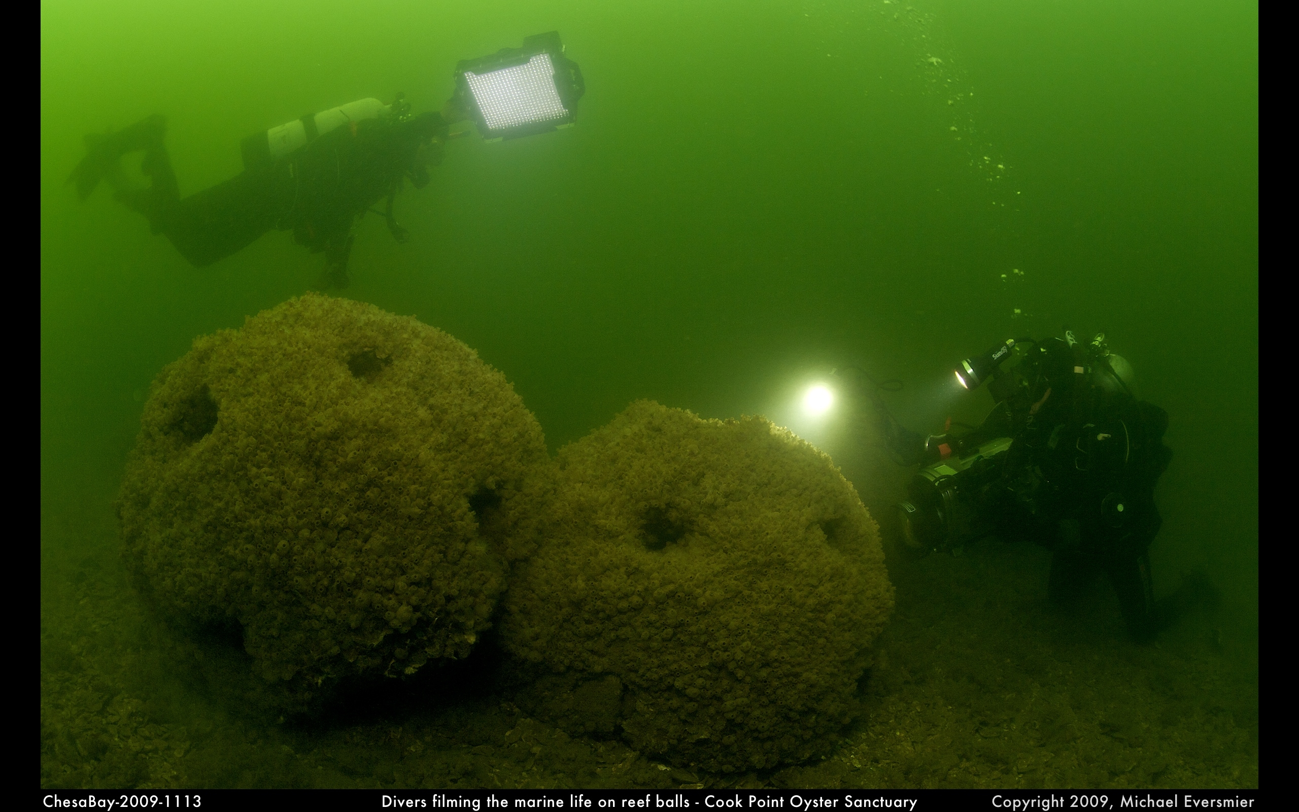 A classic Reef Ball deployment in Chesapeake Bay shows marine life developing around the balls, which is what the holes are for.