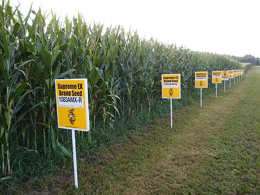 Herbicide finding intensifies battle over GMO labeling
