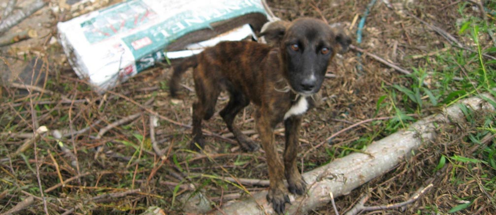 The House should act on this federal animal cruelty bill