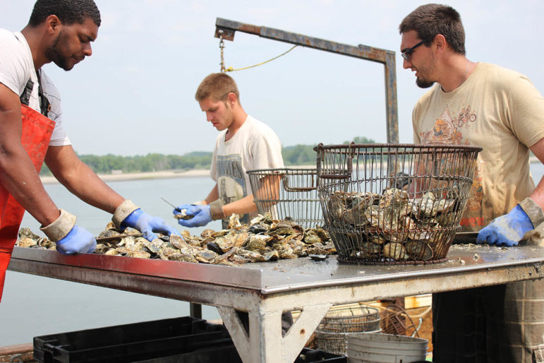 Oysters and clams in Long Island Sound may face multiple impacts from climate change – ocean acidification, which may prevent them from forming shells and more bacteria diseases such as vibrio.