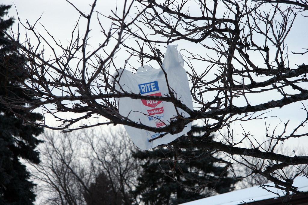 Let voters decide on plastic bag ban in a referendum