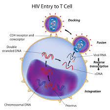 Ending HIV transmission by 2030? Doable but daunting