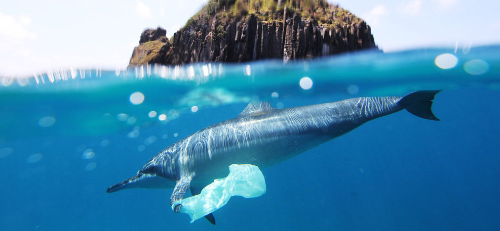 Give a sip: Stop harmful single-use plastics