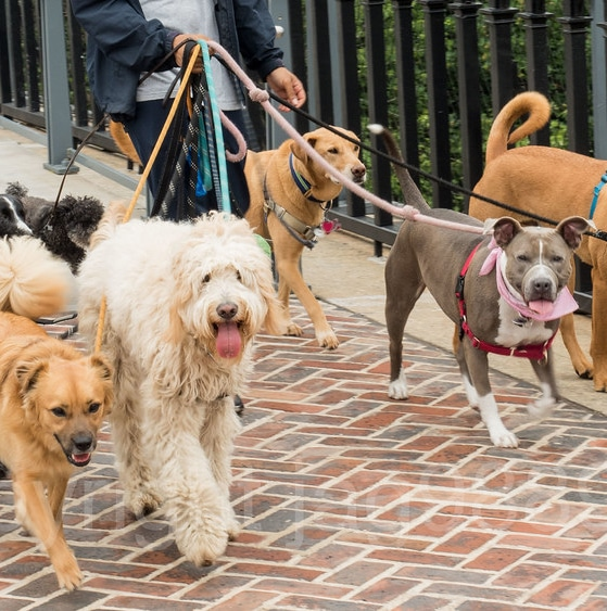 The Uber and Lyft of dog walking fight state oversight