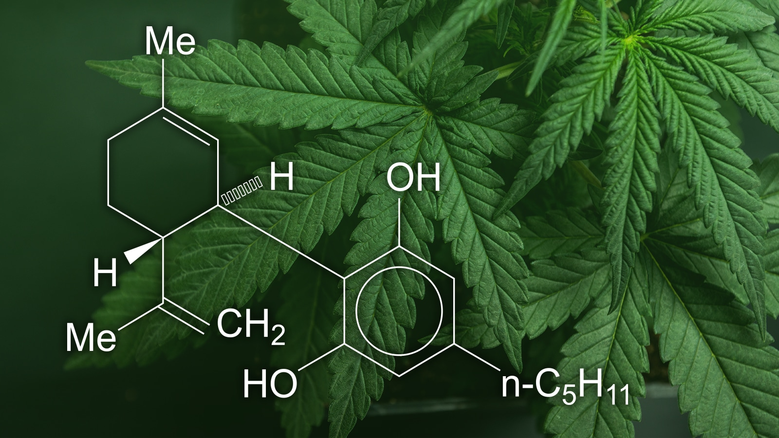 No, CBD is not a miracle molecule that can cure coronavirus, just as it won't cure many other maladies its proponents claim