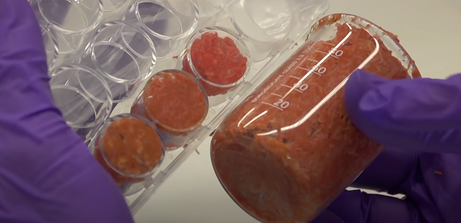 Congress should invest in cultured-meat research