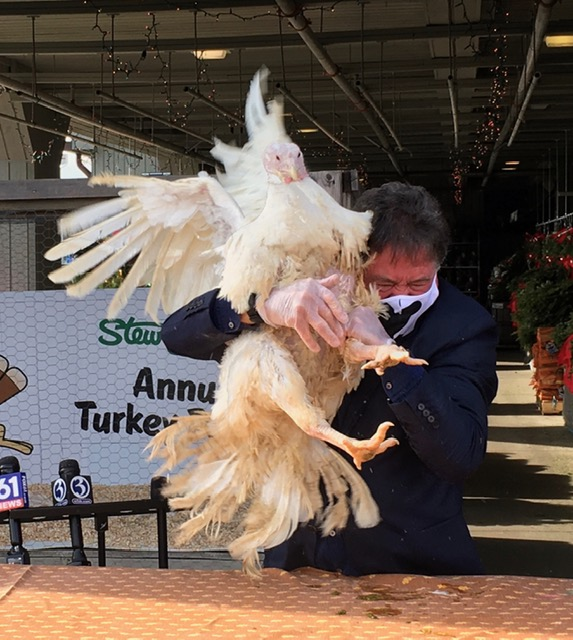 Pandemic or not, Richard Blumenthal will be there. Just ask the turkey.