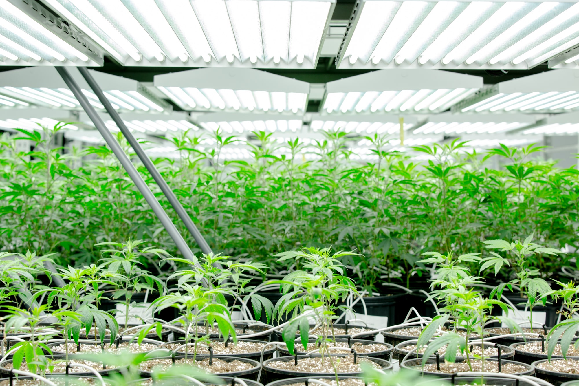 On pot issue, lawmakers and their constituents are not served by the same old scare tactics.