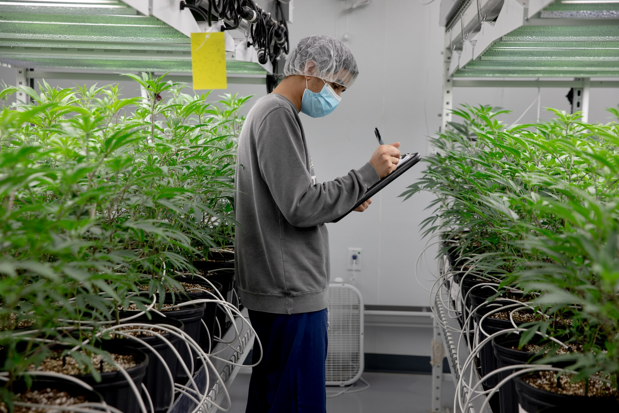 Ritter pledges passage of marijuana legalization bill in special session