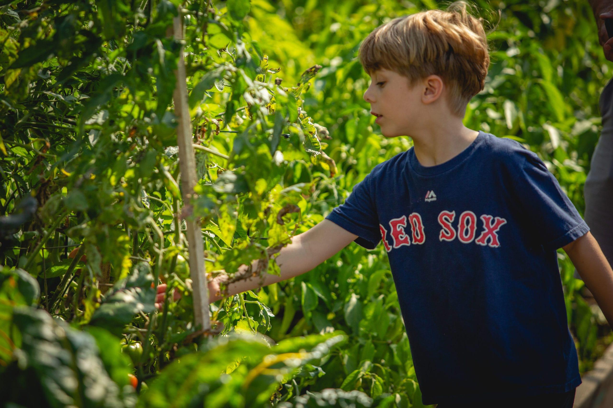 It's just not kindergarten without a garden