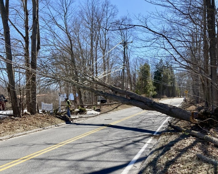 Tree management is crucial to prevent electricity outages