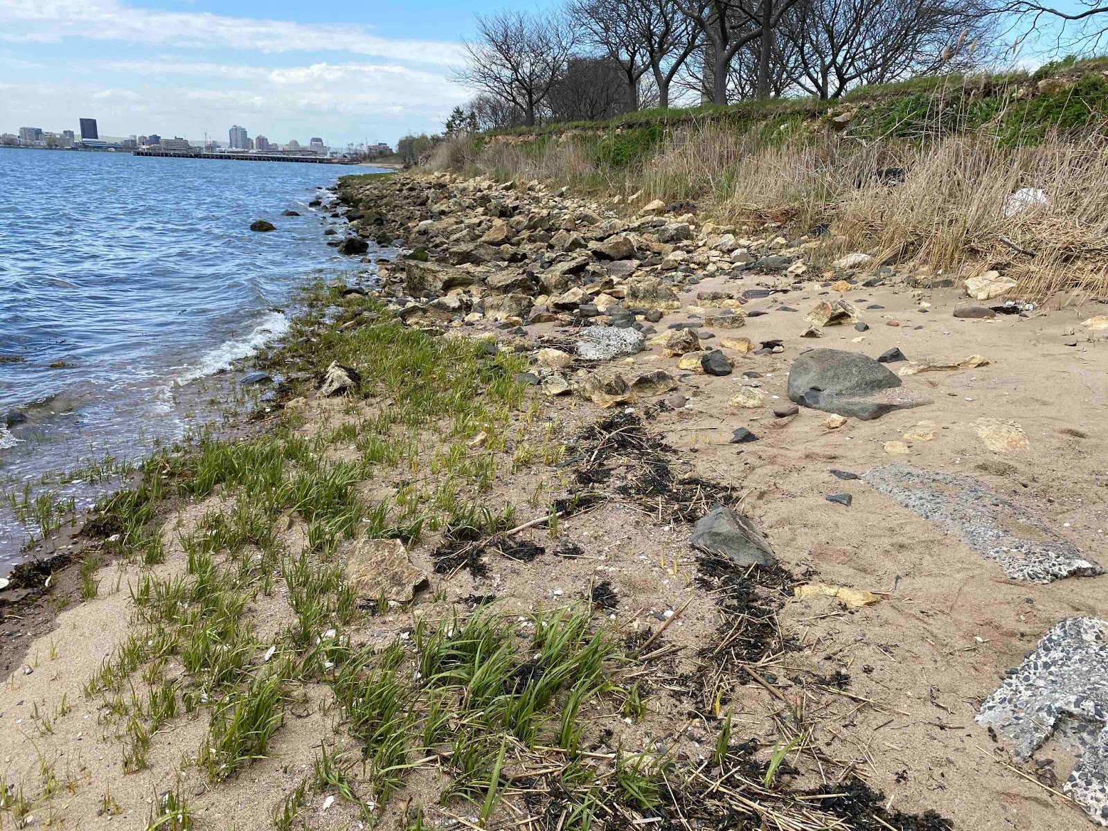 'Living shorelines' becoming more common in CT for erosion control