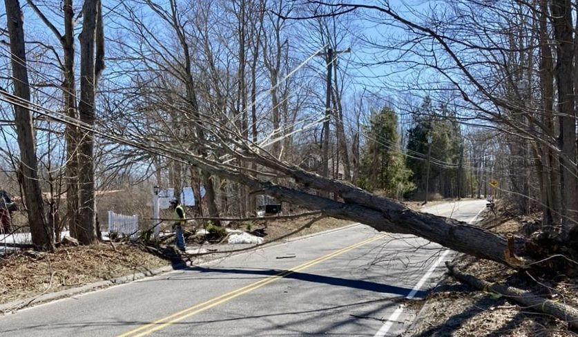 We love our trees, but they also threaten our power lines